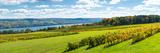 Glenora Vineyard  Seneca Lake  Finger Lakes  New York State  Usa