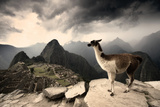 A Llama Overlooks the Pre-Columbian Inca Ruins of Machu Picchu Fotografisk trykk av Jim Richardson