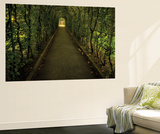 Tunnel of Shrub II Wall Mural by Dennis Frates