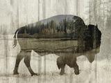 Camouflage Animals - Bison Reproduction procédé giclée par Tania Bello