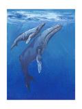 Under Sea Whales I Giclée-Premiumdruck von Tim O'toole