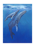 Under Sea Whales I Premium Giclee Print by Tim O'toole