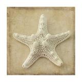 Sepia Shell I Poster von Judy Stalus