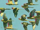 Parrots in Flight - Retro Stampa giclée di Pete Hawkins