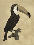The Vintage Toucan I Giclee Print by Maria Mendez