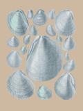 Shell Study IV Giclée-tryk af A. Poiteau