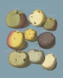 Orchard Harvest I Giclée-tryk af A. Poiteau