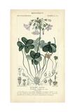 Botanique Study in Lavender I Poster tekijänä  Turpin