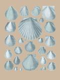 Shell Study I Giclée-tryk af A. Poiteau