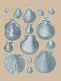 Shell Study II Giclée-tryk af A. Poiteau