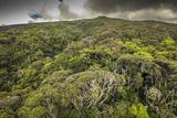 Aerial over Ohia Forest Canopy, Kamakou Preserve of Nature Conservancy, Molokai, Hawaii Fotografisk trykk av Richard Cooke III