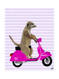 Meerkat on Pink Moped Prints by  Fab Funky