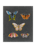 Butterflies on Slate II Reproduction giclée Premium par Naomi McCavitt