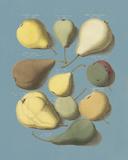 Orchard Fruits I Giclée-tryk af A. Poiteau
