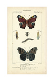 Antique Butterfly Study II Plakater af  Turpin