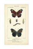 Antique Butterfly Study II Láminas por  Turpin