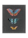 Butterflies on Slate III Reproduction giclée Premium par Naomi McCavitt
