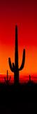Silhouette of Saguaro Cactus at Sunset, Arizona, Usa Photographic Print by Panoramic Images