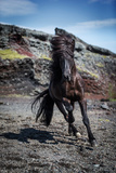 Icelandic Black Stallion, Iceland Photographic Print by Green Light Collection