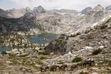 A Cowboy Leads a String of Pack Animals Lámina fotográfica por Sartore, Joel