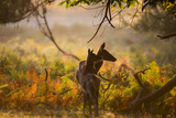 A Red Deer Mother and Young in the Autumn Leaves at Sunrise in Richmond Park Impressão fotográfica por Alex Saberi