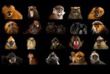 Composite Of20 Different Species of Primates Lámina fotográfica por Sartore, Joel