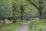 A Man Walks Down a Path in Tomies Wood in Killarney National Park, County Kerry, Ireland Photographic Print by Jeff Mauritzen
