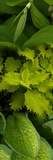 Close-Up of Green Leaves Photographic Print by Panoramic Images