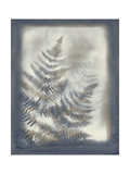 Shadows and Ferns VI Poster by Renee W. Stramel