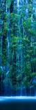 Waterfall in a Forest Fotografie-Druck