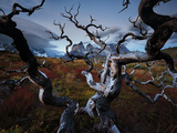 A Patagonia Scenic of the Andes Mountains, Weathered Dead Tree Branches, Clouds, and Vegetation Kunst op metaal