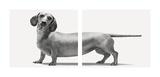 Heads and Tails Affiches par Jon Bertelli