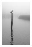 On Pelican Marsh Poster par Winthrope Hiers