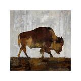 Bison Giclee-trykk av Carl Colburn