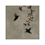 Dance in Flight I Reproduction procédé giclée par Chris Donovan