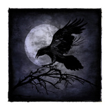 Crow Giclee Print by Martin Wagner