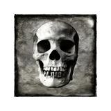 Skull I Giclee Print by Martin Wagner