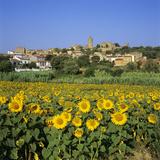Hilltop Village Above Sunflower Field, Pals, Catalunya (Costa Brava), Spain Reproduction photographique par Stuart Black