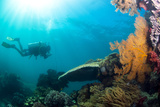 Scuba Diver Swimming with Gopro in Coral Landscape Scenic at Thetford Reef Fotografie-Druck von Louise Murray