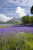 Wild Bluebells (Hyacinthoides Non-Scripta) Beside Loch Leven Photographic Print by Ruth Tomlinson