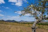 Chongoni Rock-Art Area, Malawi, Africa Fotografisk tryk af Michael Runkel