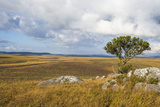 Overlook over the Highlands of the Nyika National Park, Malawi, Africa Fotografisk tryk af Michael Runkel