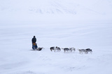 Husky Dog Sled in Adventdalen Valley Photographic Print by Stephen Studd