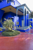 Jardin Majorelle, Owned by Yves St. Laurent, Marrakech, Morocco, North Africa, Africa Photographic Print by Stephen Studd
