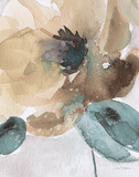 Watercolor Poppy II Poster by Carol Robinson