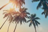 Tropical Sunset Premium fototryk af  byrdyak