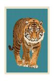 Tiger - Letterpress Posters af  Lantern Press