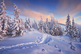 Fir Trees under the Snow. Mountain Forest in Winter. Christmas Landscape. the Path in the Snow. Car Lámina fotográfica por  Kotenko