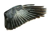 Wings Fotografisk trykk av Vitaliy Pakhnyushchyy
