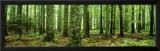 Rain Forest Fotografia